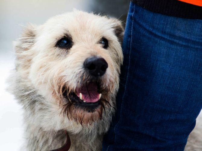 dlaczego-warto-adoptowac-psa-fot-materialy-promocyjne