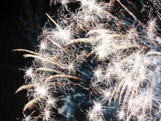 Wystrzały fajerwerków – niebezpieczne dla zwierząt