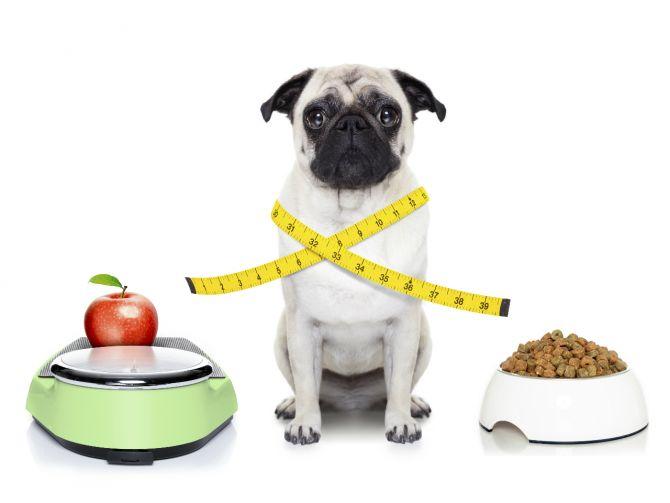 dbaj-o-zbilansowana-diete-fot-materialy-promocyjne