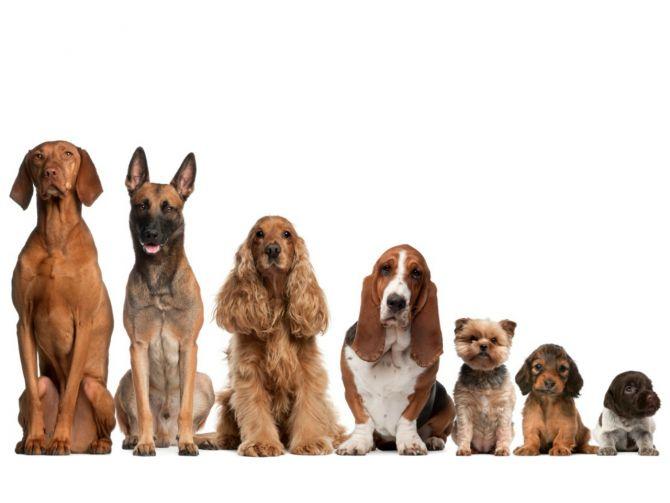 jakiego-psa-wybrac-do-adopcji-fot-materialy-promocyjne