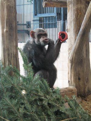 fot-z-arch-zoo-w-warszawie