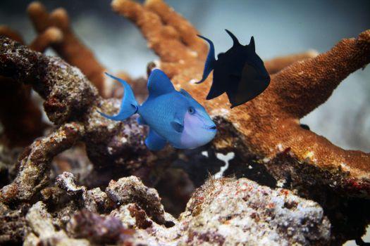 podwodne-abc