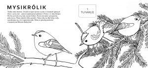 informacje-o-ptakach-sa-przedstawiono-w-formie-interesujacych-opowiastek