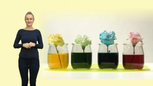 w-eksperymencie-sprawdzimy-czy-uda-sie-zabawic-biale-kwiaty-fot-pawel-wrobel