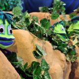Żaby mieszkają przy pobliskim stawie. Zawsze rozśpiewane, nieco zarozumiałe, ale chętnie służą pomocą (fot. J.Bogacz/TVP)