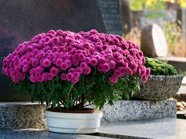 Jakie kwiaty wybrać na Święto Zmarłych?