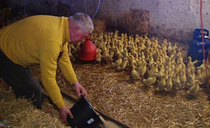 Marne szanse na odszkodowania po ptasiej grypie