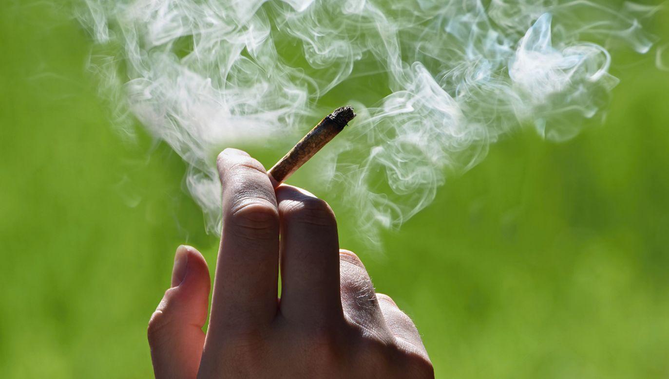 Młody mężczyzna twierdził, że znalazł marihuanę (fot. Shutterstock/Tunatura)