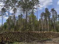 Trybunał Sprawiedliwości chce zakazu wycinki drzew w Puszczy Białowieskiej