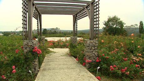 Jesienny ogród botaniczny