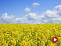 #PlanDlaWsi. Polskie rolnictwo lokomotywą wzrostu gospodarczego