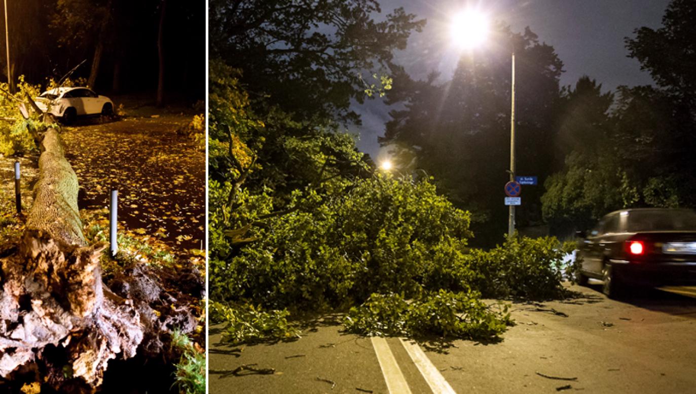 Połamane gałęzie na ulicy we Wrocławiu (fot. PAP/Jakub Kaczmarczyk/Aleksander Koźmiński)
