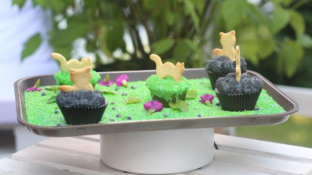 Koci piknik Julki