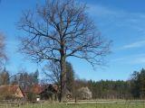 16 niezwykłych drzew konkursu Drzewo Roku 2017