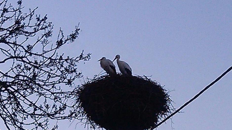 Para bocianów już razem, od Walentynek