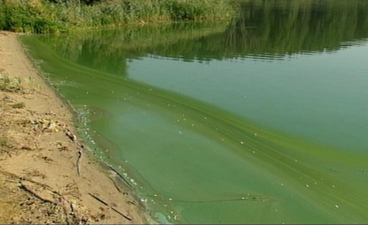Ścieki wylewane na pola przy jeziorze zagrażają środowisku