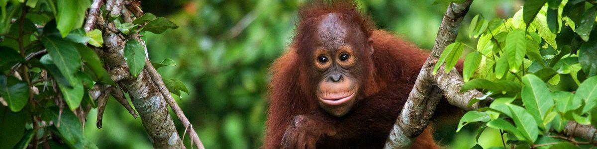 Tajemnice Borneo