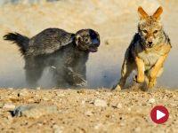 Bardzo małe zwierzątka – film dokumentalny