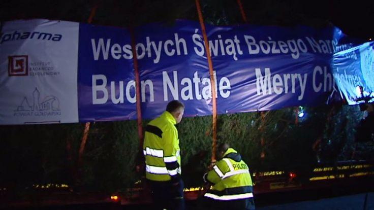 Drzewo spod Ełku dotarło na polsko-niemiecką granicę