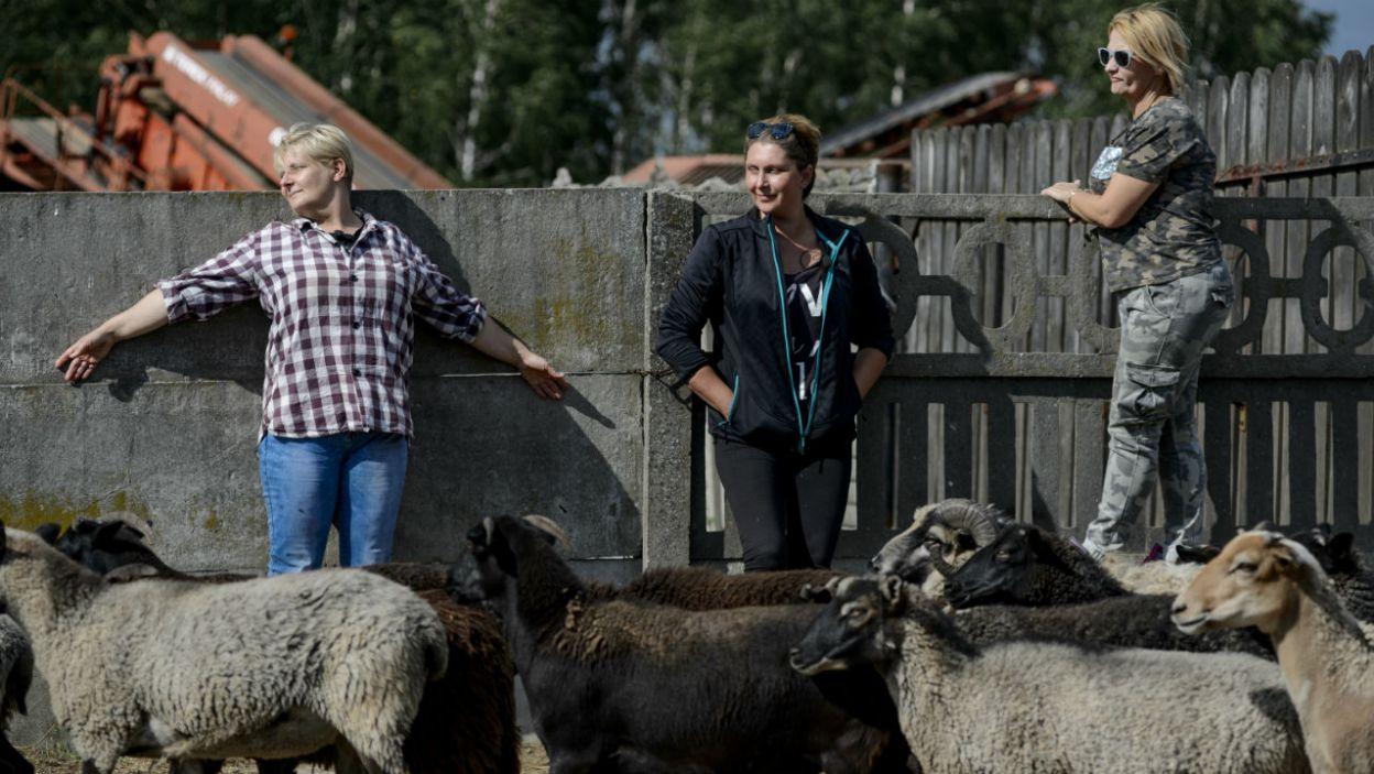 Jan przygotował więc dla kandydatek zadanie: muszą zagonić owce na strzyżenie! (fot. TVP)