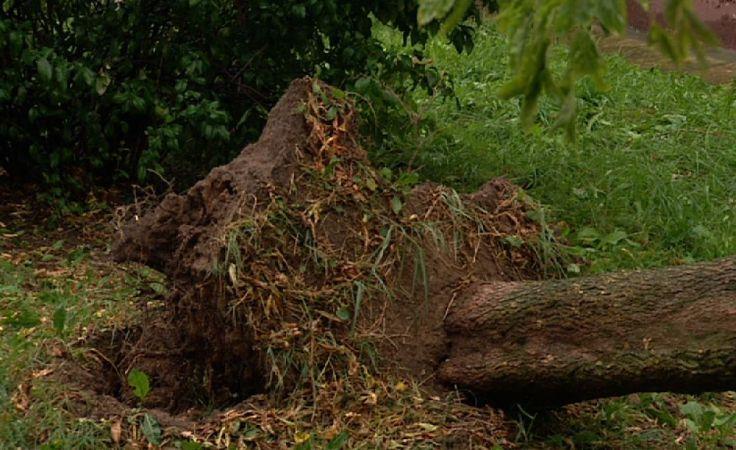 Silny, porywisy wiatr w regionie – są zniszczenia