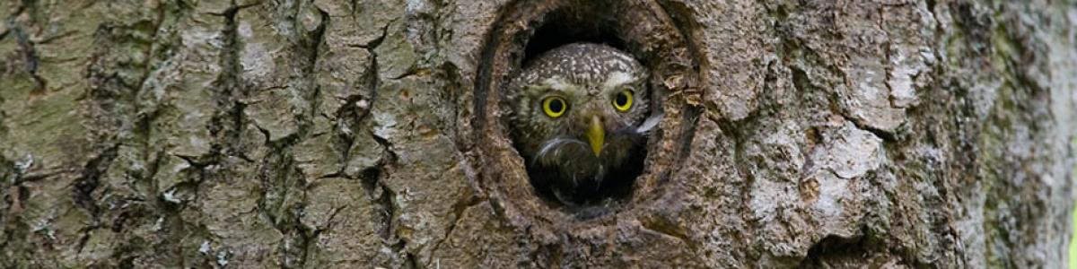 Gazda ptasiego gniazda