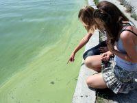 Sinice w natarciu. Zakaz kąpieli m.in. w Łebie i Helu