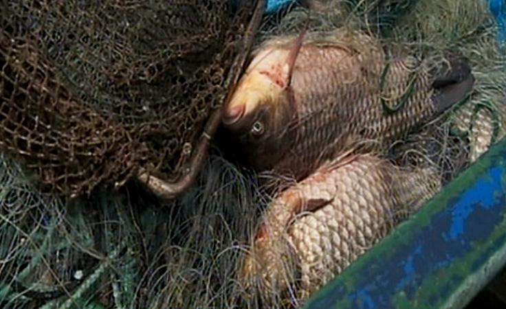Nielegalne odłowy ryb z jeziora Lubinieckiego?