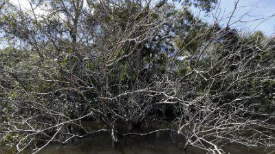 BBC w Jedynce -  Dzika Brazylia cz. 1 Niebezpieczna kraina