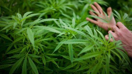 Funkcjonariusze Policji i SG zabezpieczyli dotychczas znaczne ilości marihuany i haszyszu (fot. Getty Images/Uriel Sinai)