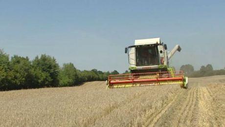 Rolnicy rozpoczęli żniwa. Pogoda im do tej pory nie sprzyjała
