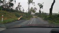 Powalone drzewa w Borach na trasie Legbąd - Tuchola (fot. Marcin Góral)