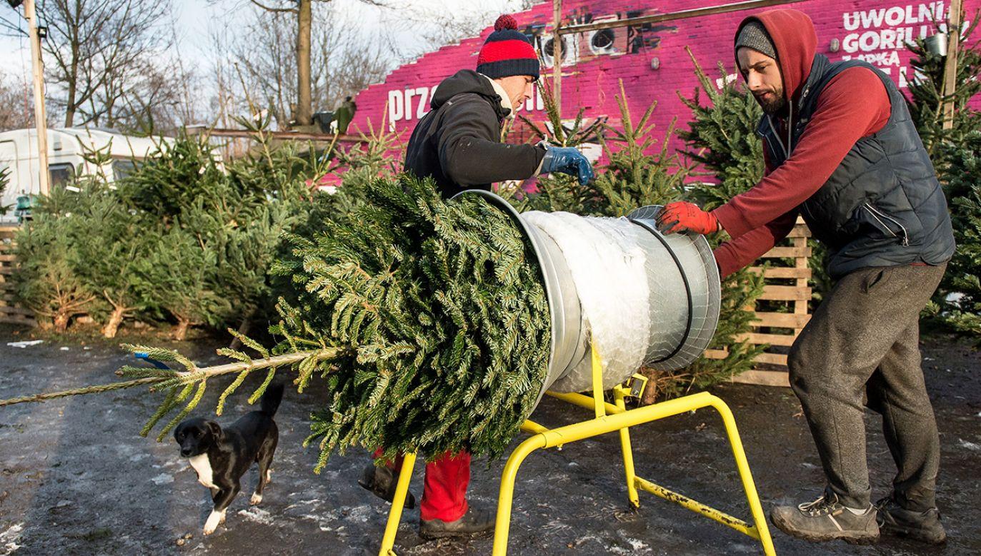Zbliżające się Boże Narodzenie będzie bezśnieżne i ciepłe (fot. PAP/Maciej Kulczyński)