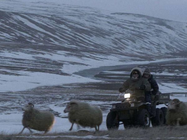 Barany. Islandzka opowieść – film fabularny