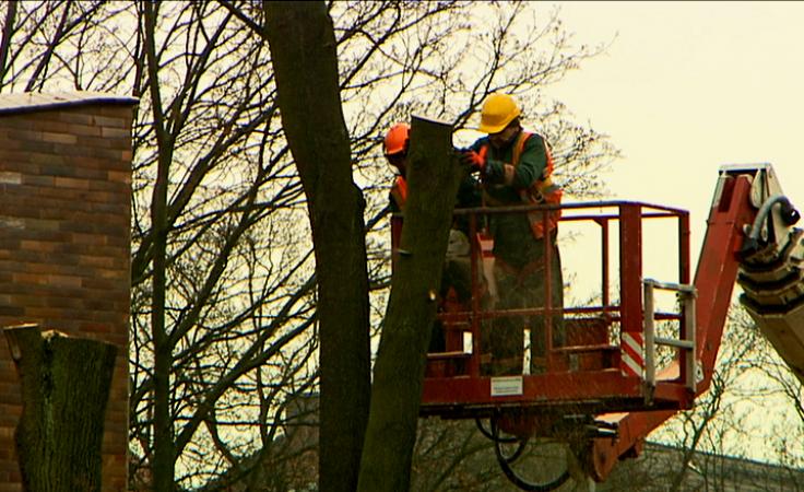 Mieszkańcy alarmują: 200-letnie drzewa poszły pod topór