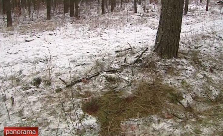 Ciało młodego mężczyzny odnalezione w lesie