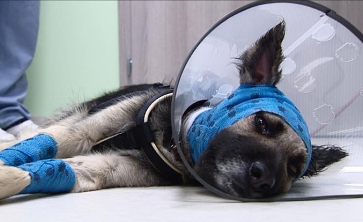 Bezduszny sadysta bestialsko skatował swojego psa