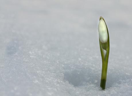 Wczesna wiosna w Bieszczadach