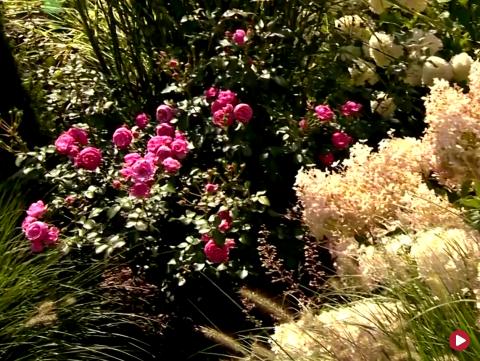 Rok w ogrodzie extra, 6.10.2018