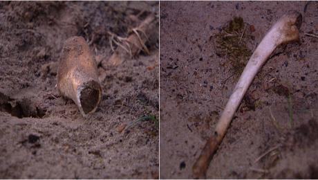 Ludzkie szczątki przy remizie. Sprawą zajęli się archeolodzy