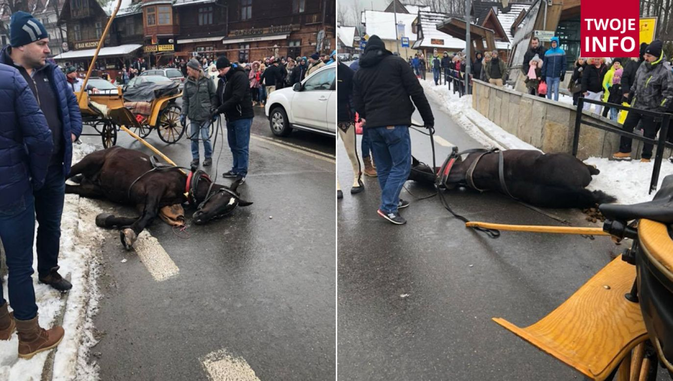 Na koniec koń nie hamując wpadł w betonowe ogrodzenie (fot. Twoje Info/Krzysztof)