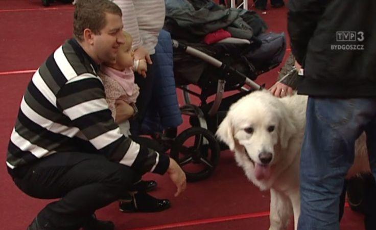 Setki psów zaprezentowało swoje wdzięki