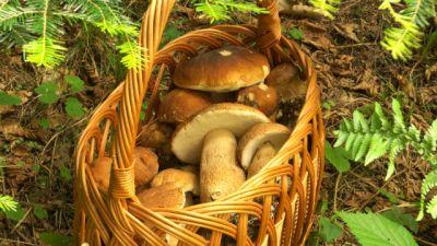 Okrasa łamie przepisy - Dary z lasu i z zagrody