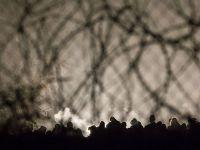 Węgrzy wybudują drugi płot na granicy z Serbią. Władze obawiają się napływu migrantów