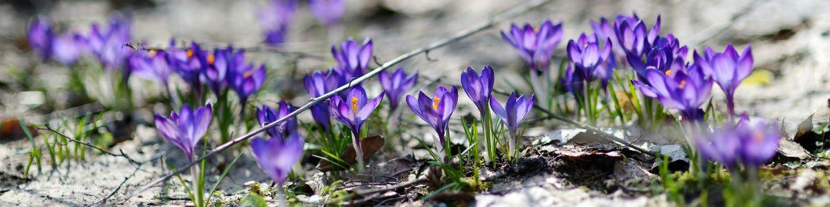 Wiosna, czy to ty?