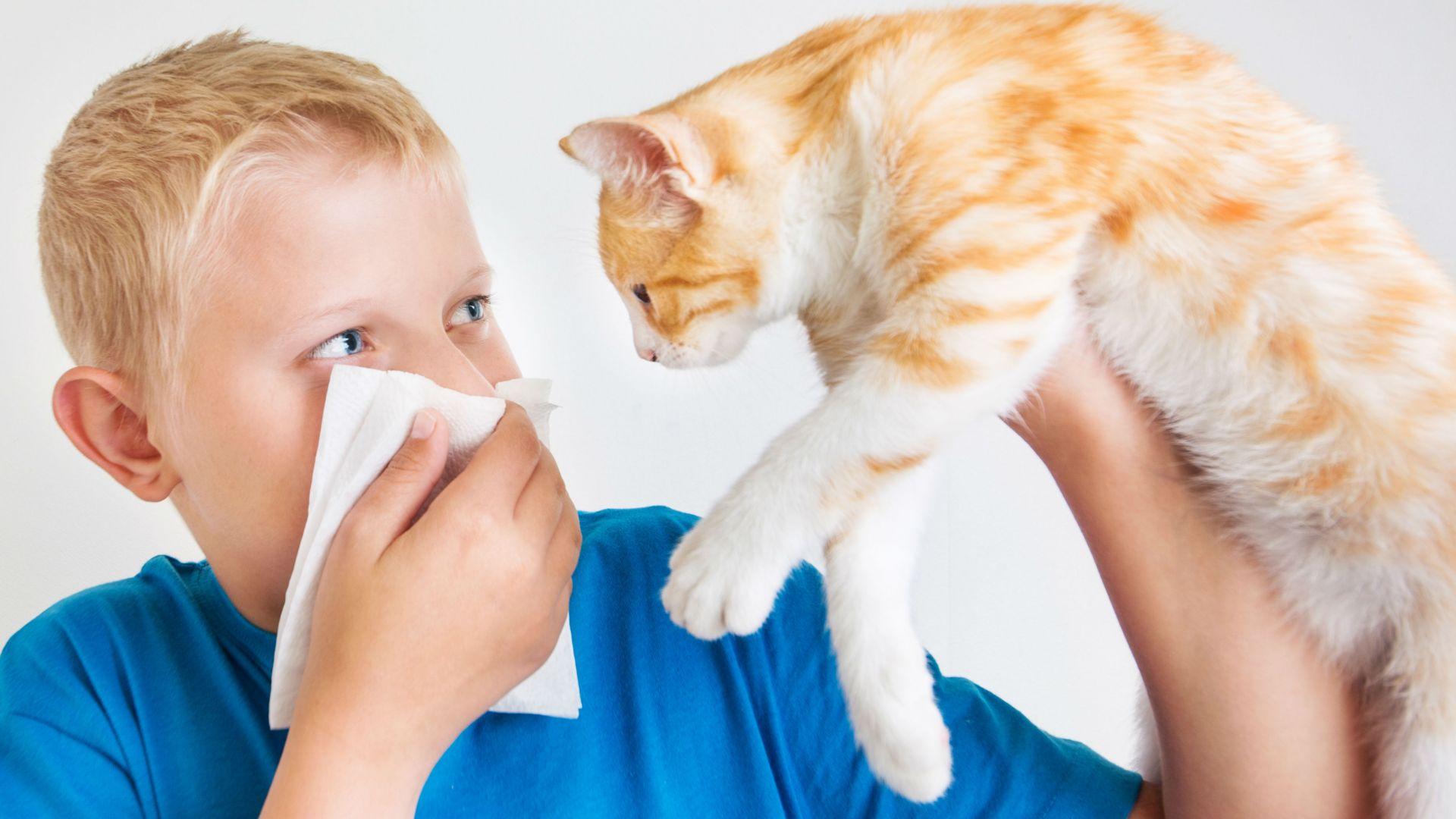 Как вылечить аллергию в домашних условиях 54