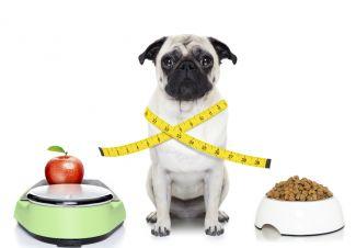 dbaj-o-zbilansowana-diete-i-ciesz-sie-zdrowiem-psa