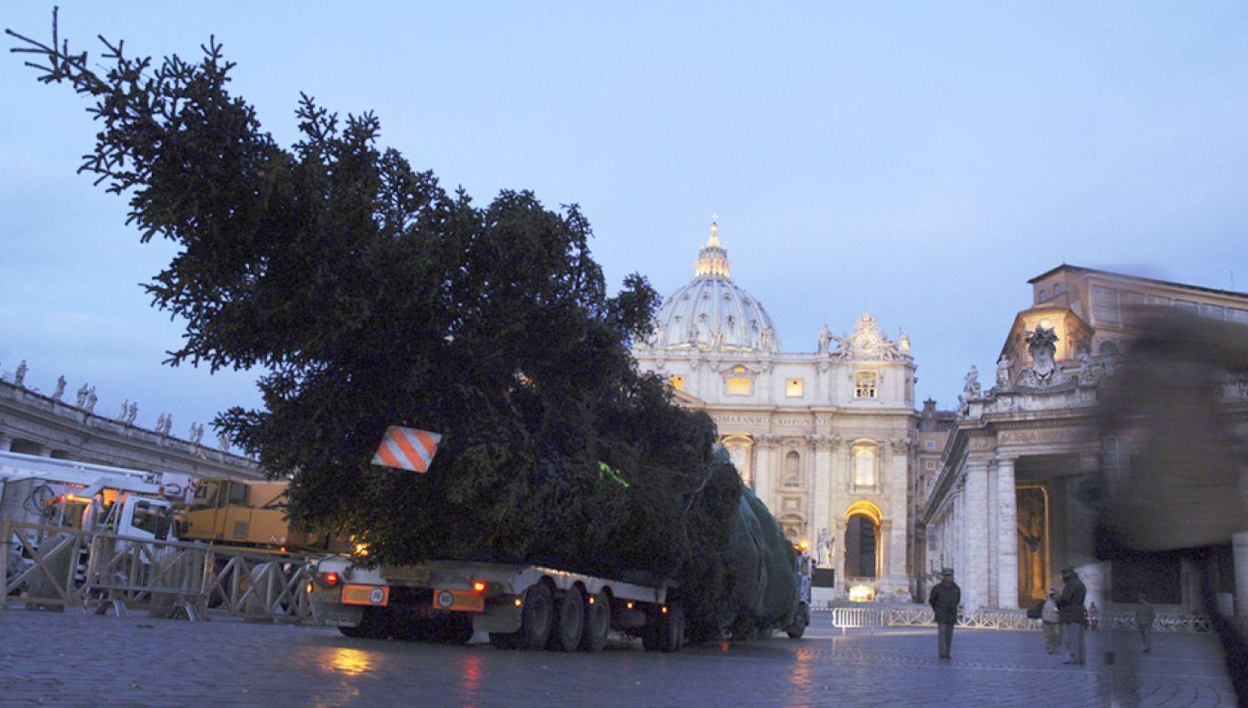Choinka na placu Świętego Piotra to już watykańska tradycja (fot.  Franco Origlia/Getty Images)