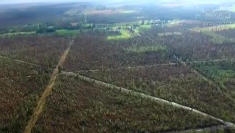 To największa klęska w historii powojennego leśnictwa