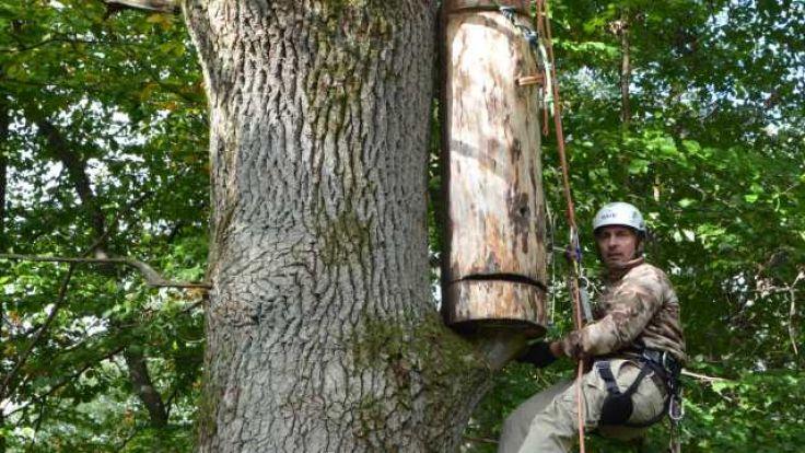 Kłodę bartną wyrzeźbił jeden z elbląskich leśników (fot. elblag.gdansk.lasy.gov.pl)